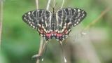 [이강운의 곤충記]곤충의 겨울나기…한겨울에 살아남지 못하면 다 죽는다